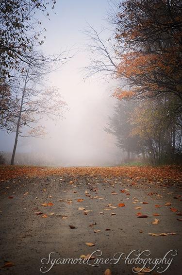 autumn-1-w