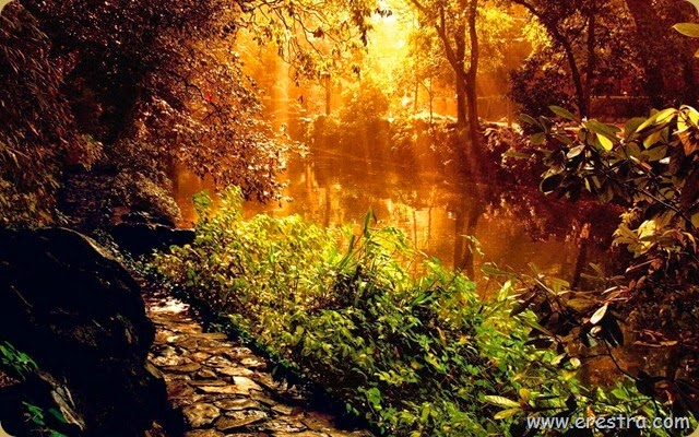 Forest_River_Sunset