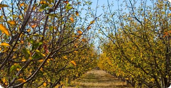 ruta-manzana