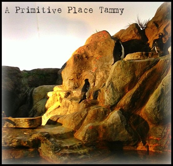 APP ~Tammy