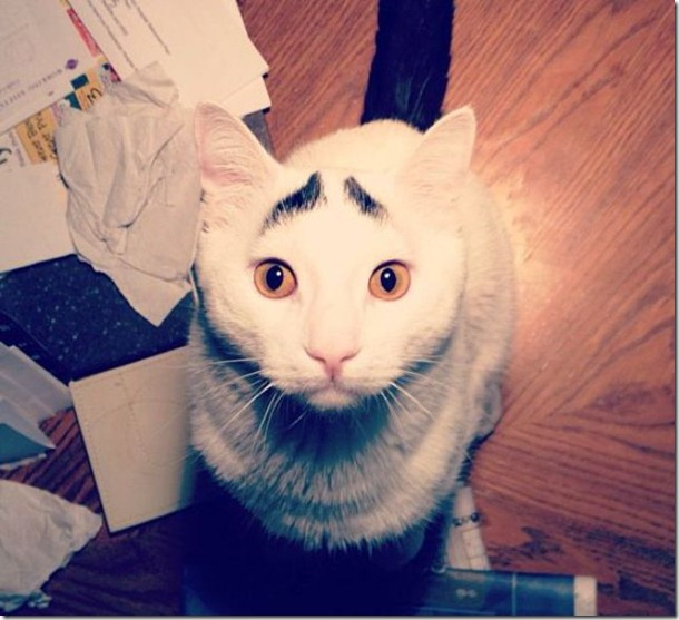 white-cat-eyebrows-25