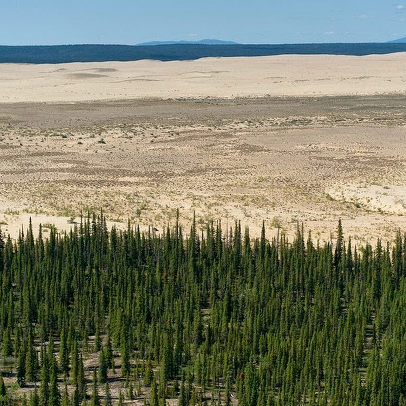 The Great Kobuk Sand Dunes – An Alaskan Oddity