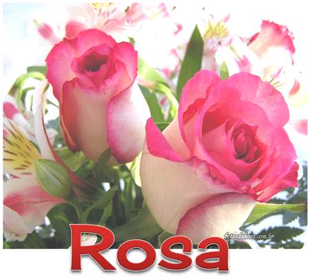 1 ROSA