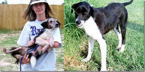 Animais Antes e Depois do Resgate (31)