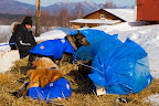 Rick Casillo tends to his sled dogs using bales as wind breaks in Ruby 2006 Iditarod Alaska Winter