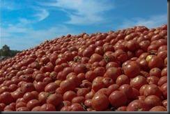 ok-tomato%20mountain