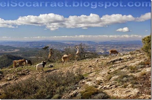 ObresCAVAagres elSocarraet ©rfaPV (7)