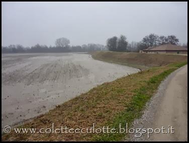 Passeggiata sull'argine dopo la piena - Padulle - 11 gennaio 2014 (5)