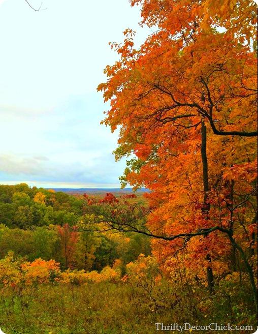 fall trees Indiana