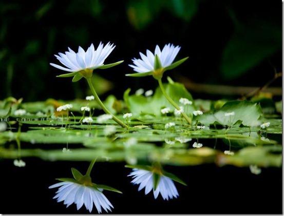 flores-facebook-tumblr-rosas-las flores-fotos de flores-714