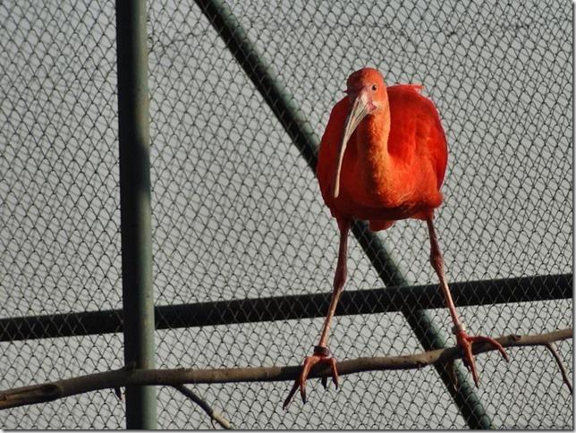 Santiago_Zoo_DSC03770