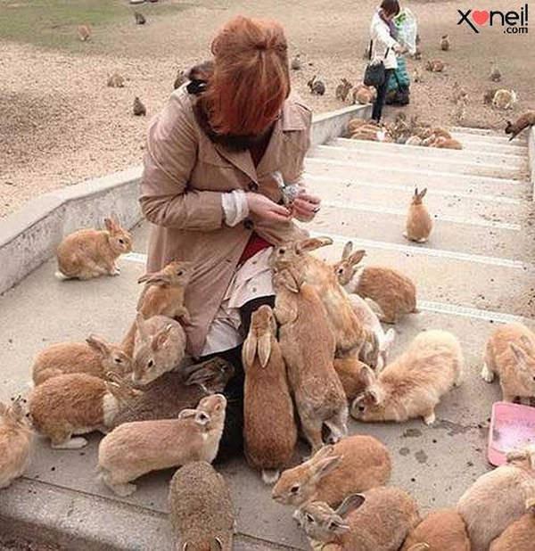 5- Ilha japonesa é dominada por coelhos
