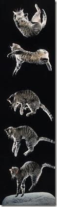 Falling-Cats