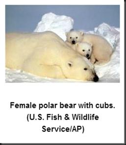 bearwithcubs