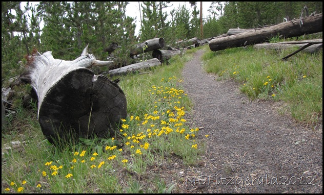 IMG_2811IceLake Trail