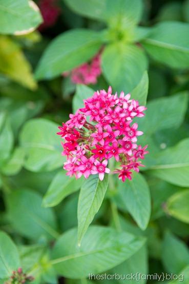 Callaway Gardens butterfly garden blog-8