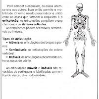 sistema articular.jpg