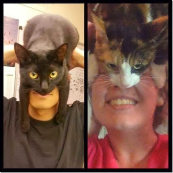 catman-meme-face-8