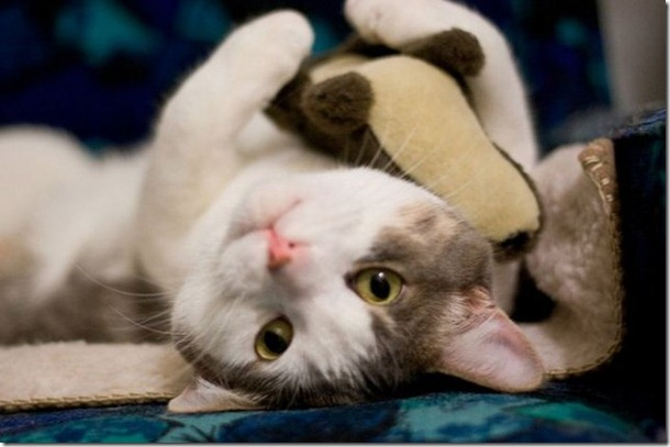 cats-stuffed-animals-7