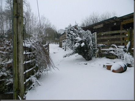 spring snow 2013 002