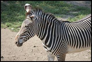 Zoo5 047