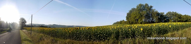P1040240-245_stitch sunflower field