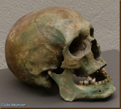Cráneo de la cueva de los Hombres Verdes - Urbiola - Museo de Navarra