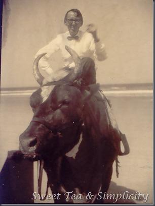 riding bull
