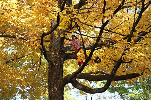 IMG_8568 Little Girl In Tree