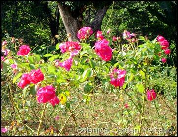 Botanical Garden, Yercaud