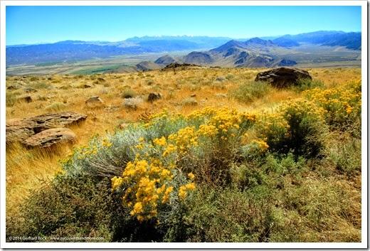 Fall color in California's Eastern Sierra