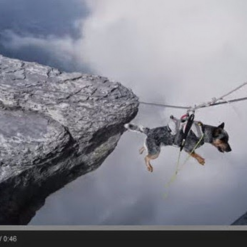 Ο σκύλος που πετάει