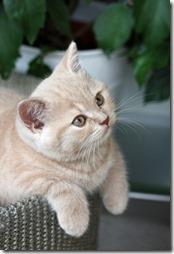 Fotos de gato buscoimagenes (40)