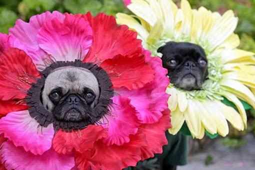 Собаки в костюмах цветов