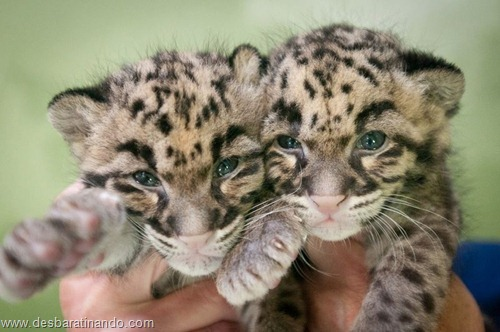 filhotes recem nascidos zoo zoologico desbaratinando animais lindos fofos  (2)