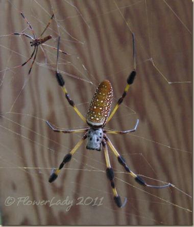 07-17-spider3