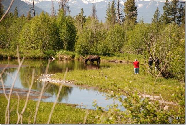 06-08-13 A Moose Wilson Road (9)