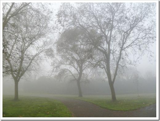 121211_fog_28