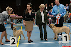 20130510-Bullmastiff-Worldcup-1046.jpg