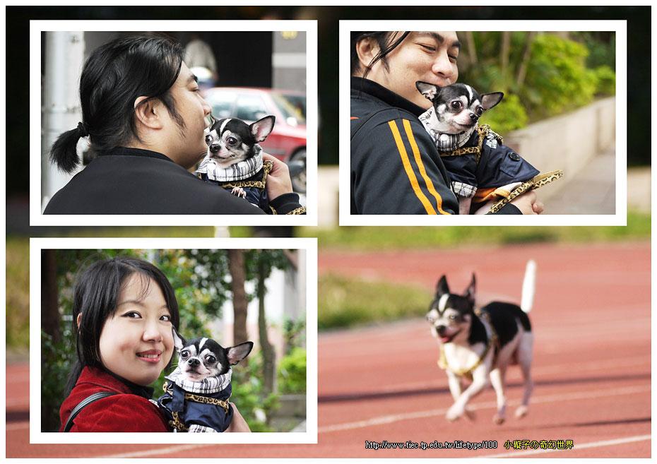 dog-fly08.jpg