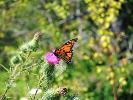 20140818_124615-pq-butterfly
