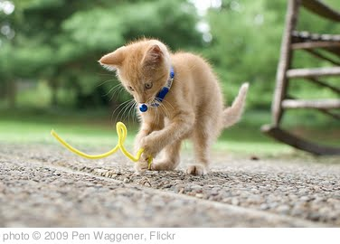 'Kitten Accomplished' photo (c) 2009, Pen Waggener - license: http://creativecommons.org/licenses/by/2.0/
