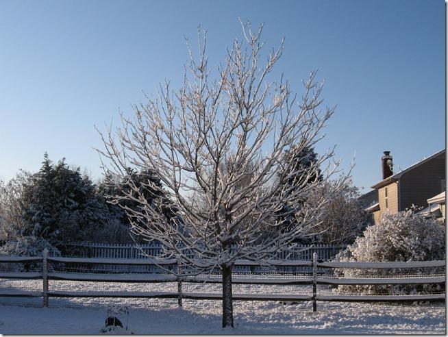 Snow 02 (17)