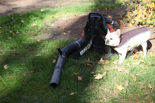 Look what I found, a leaf blower.  What do you say I have a go with it?