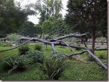 L'arbre aux voyelles de Pennone (1999)