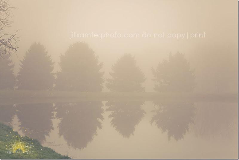 fog-5426