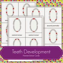 FREE Teeth Development Nomenclature Cards
