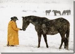 domar caballos dibujos (21)
