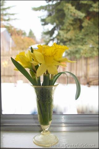 Snowy Day Daffodils