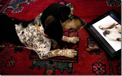 TV com programação exclusiva para cachorros